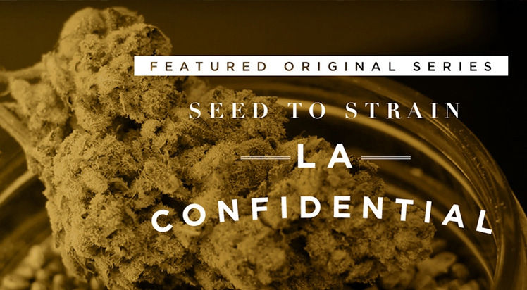Video Original: Seed to Strain: DNA Genetics Amsterdam and LA Confidential